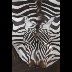 Peau de Zebre - Afrique du...