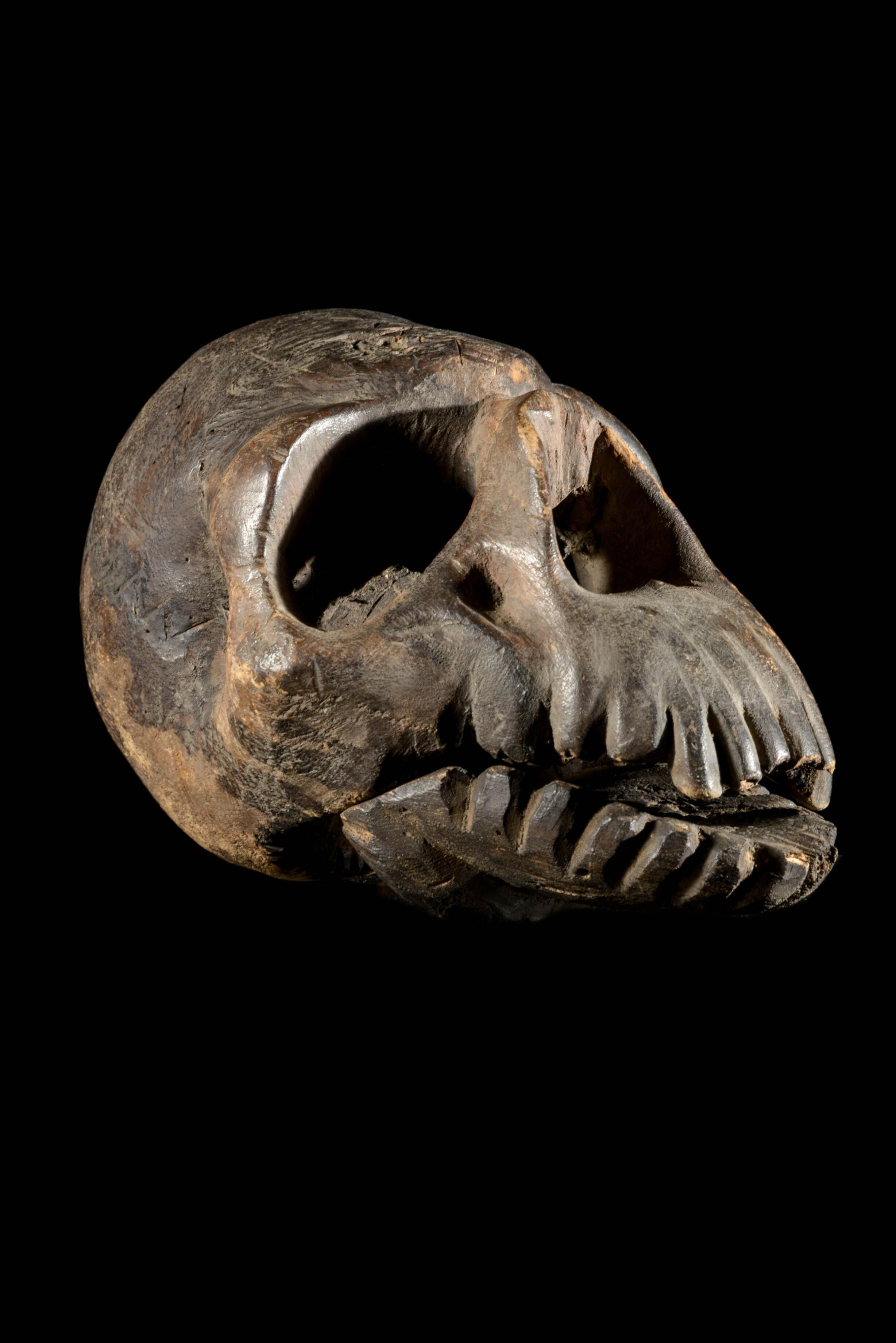 Crâne blond - Tiv - Nigeria