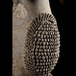 Poupee Brassard en cuir - Kirdi ? - Cameroun - Poupees d'afrique