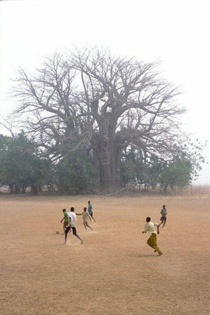 Perigot - Tirage numerique - Foot Baobab